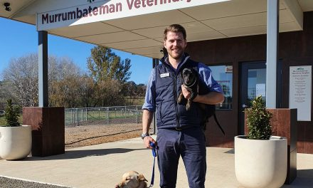 Yass Valley Vets – Best in Business Agility