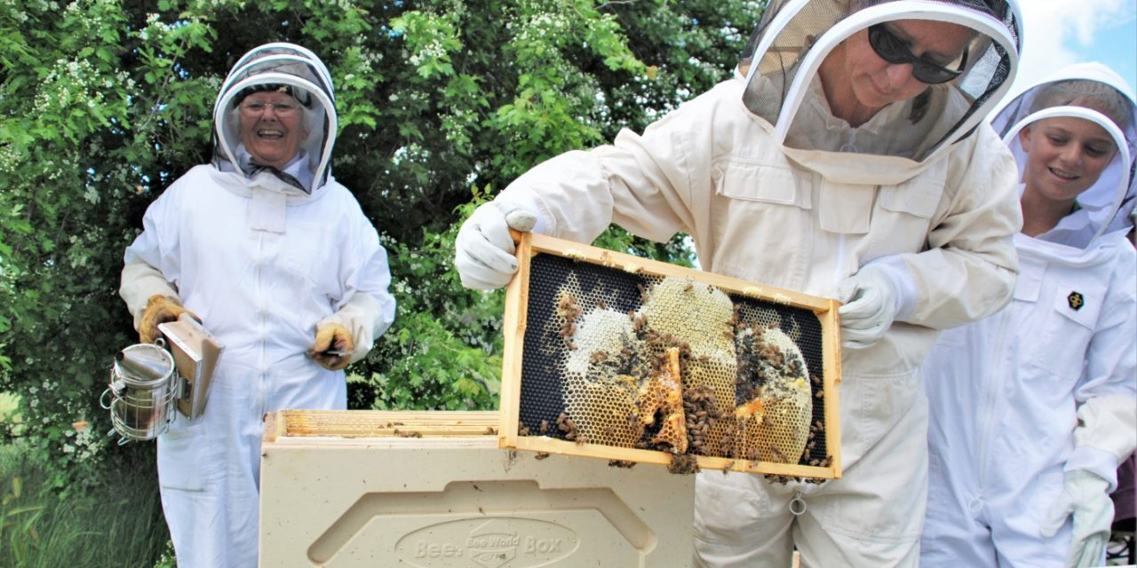Bees swarming? Who are you going to call?