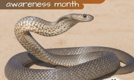 Snakebite emergency. Do you know the signs for pets?