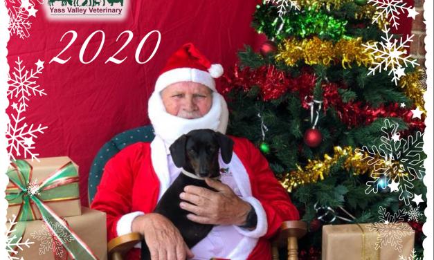 Santa Paws Photos for a good cause