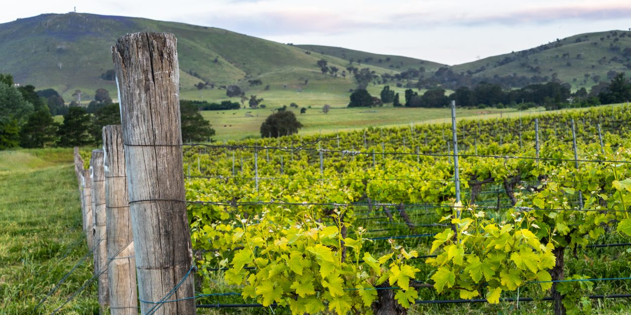 """Poachers Riesling is our wine of the week """"…hints of citrus blossom"""""""