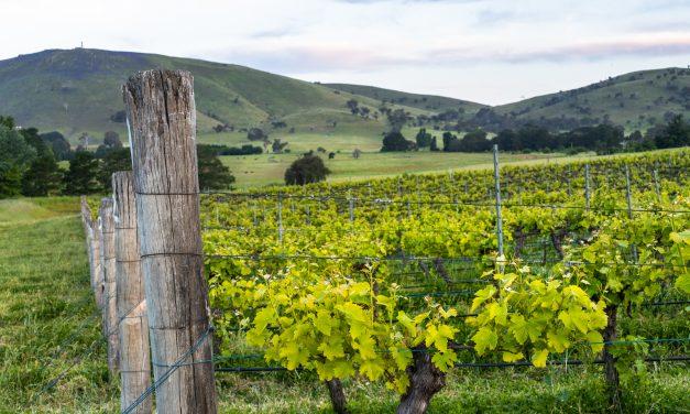 Aussie wine styles Oi Oi Oi!