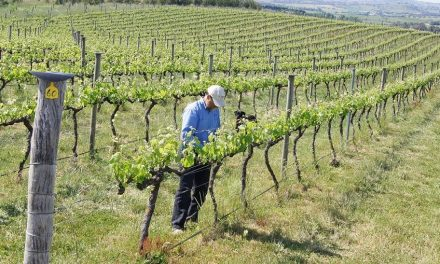Dog Trap Vineyard sure got tails wagging as our Wine of the Week!