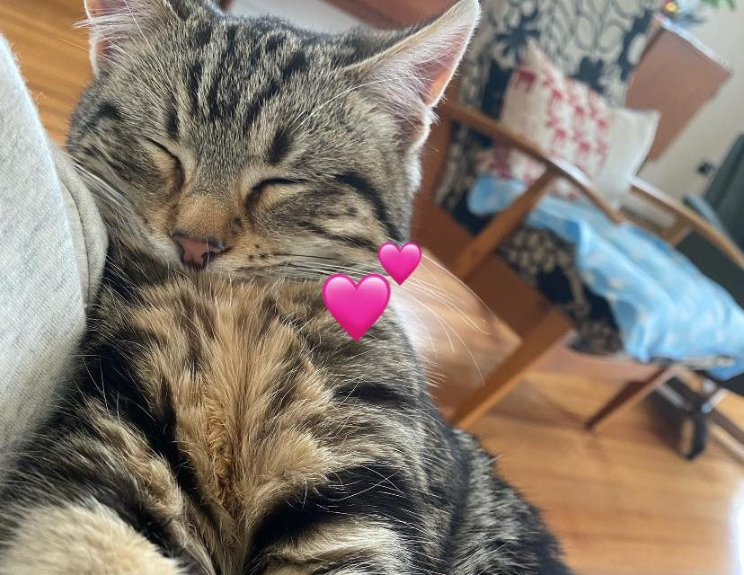 Yass Valley Feline Foundation starts for the Yass Valley's stray cats
